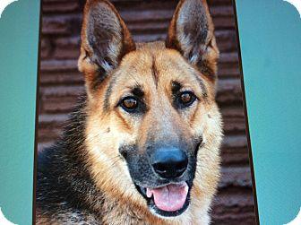 German Shepherd Dog Dog for adoption in Los Angeles, California - BENJI VON BAKERS