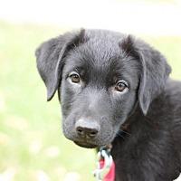 Adopt A Pet :: River - Saskatoon, SK