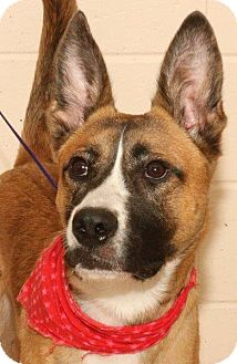 Shepherd (Unknown Type) Mix Dog for adoption in McDonough, Georgia - P-Shep