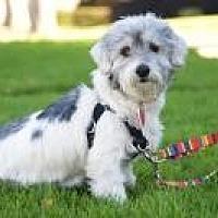 Adopt A Pet :: Lulu - Van Nuys, CA