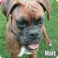 Adopt A Pet :: Matt - Encino, CA
