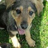 Adopt A Pet :: Sandy - Rexford, NY