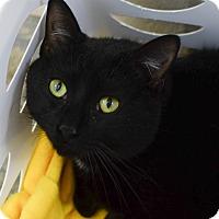 Adopt A Pet :: Brutus - Greenwood, SC