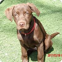 Adopt A Pet :: Ava (30 lb) Video! - Sussex, NJ