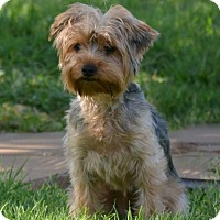 Adopt A Pet :: Ritzy - Abilene, TX