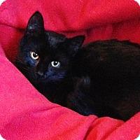Adopt A Pet :: John John - Vancouver, BC