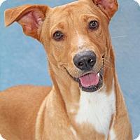 Adopt A Pet :: Ulysses - Encinitas, CA