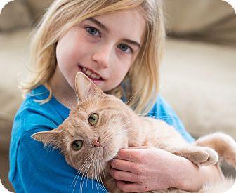 Domestic Shorthair Cat for adoption in Chicago, Illinois - Meowzer