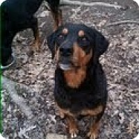 Adopt A Pet :: Lexi (Courtesy Listing) - Richmond, VA