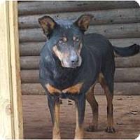 Adopt A Pet :: Boo Boo - Douglasville, GA