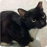 Adopt A Pet :: Shadow - Lakeland, FL