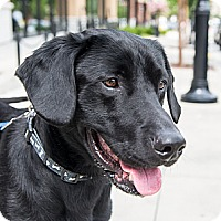 Adopt A Pet :: Sebastian - Cumming, GA