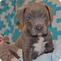 Adopt A Pet :: QUINCY - CHICAGO, IL