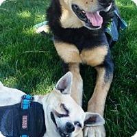 Adopt A Pet :: Lou - Gilbert, AZ