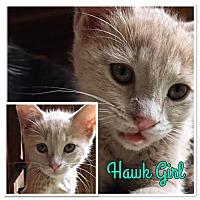 Adopt A Pet :: Hawk Girl - McDonough, GA