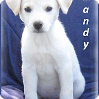 Adopt A Pet :: Mandy-So Sweet and Friendly - Marlborough, MA