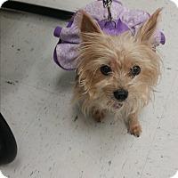 Adopt A Pet :: Annabelle - West Palm Beach, FL
