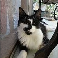 Adopt A Pet :: Liam - Toluca Lake, CA