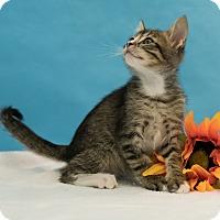 Adopt A Pet :: Macchiato - Houston, TX