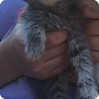 Adopt A Pet :: Venus - Hazard, KY