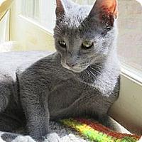 Adopt A Pet :: Silva & Simone (Sweet Sisters) - Arlington, VA
