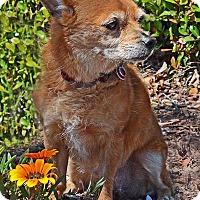 Adopt A Pet :: Sadie - San Jose, CA