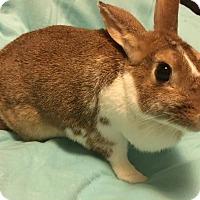 Adopt A Pet :: Marigold - Hillside, NJ