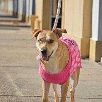 Adopt A Pet :: Sally - Houston, TX