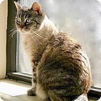 Adopt A Pet :: Betsy - Long Beach, NY