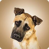 Adopt A Pet :: Vinny - Prescott, AZ