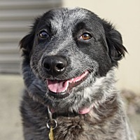 Adopt A Pet :: LUA - Pt. Richmond, CA
