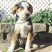 Adopt A Pet :: Gresham - West Chicago, IL