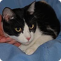 Adopt A Pet :: Checker - San Bernardino, CA