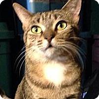 Adopt A Pet :: Latifah - New York, NY