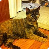 Adopt A Pet :: Topaz - Chicago, IL