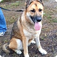 Adopt A Pet :: Brandy - Tallahassee, FL
