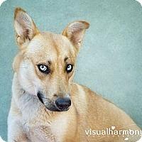 Adopt A Pet :: Cali - Phoenix, AZ