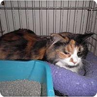 Adopt A Pet :: Sasha - Warren, MI