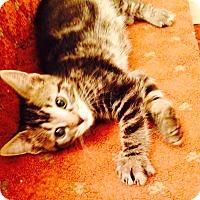 Adopt A Pet :: Baby Boys - Harriman, NY