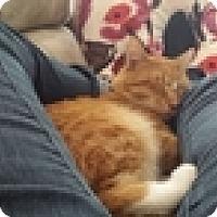 Adopt A Pet :: Mason - Vancouver, BC