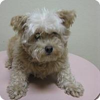 Adopt A Pet :: Teddy - Gary, IN