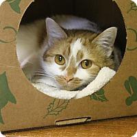 Adopt A Pet :: Thai - Medina, OH