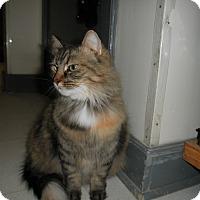 Adopt A Pet :: Hummingbird - Milwaukee, WI