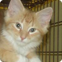 Adopt A Pet :: SHAMEOUS - Acme, PA