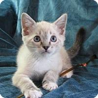 Adopt A Pet :: Anna - Davis, CA