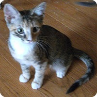 Adopt A Pet :: Ember-Adoption Pending! - Colmar, PA