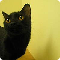 Adopt A Pet :: Vesper - Milwaukee, WI