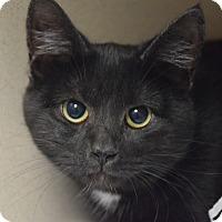 Adopt A Pet :: Morgan - Pottsville, PA