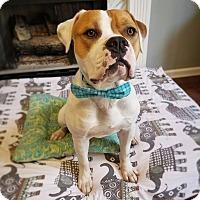 Adopt A Pet :: Big Sal - Waxhaw, NC