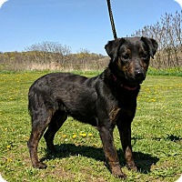 Adopt A Pet :: Kane - Lisbon, OH
